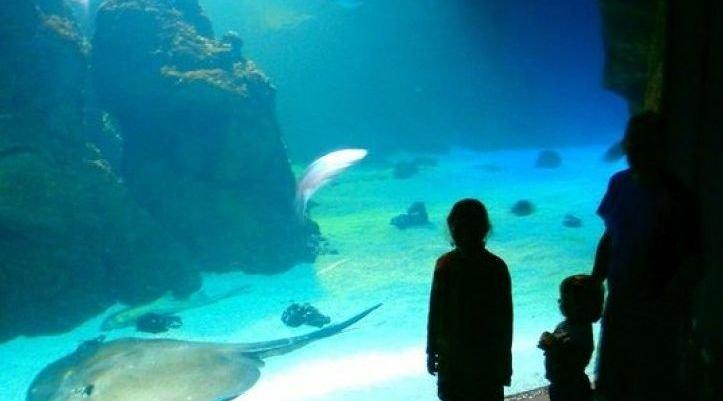 Aquarium de Lanzarote portada