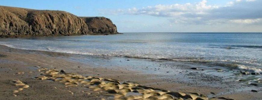 Playas para perros en Lanzarote