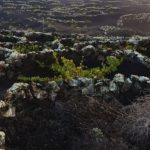 Ruta del vino en Lanzarote